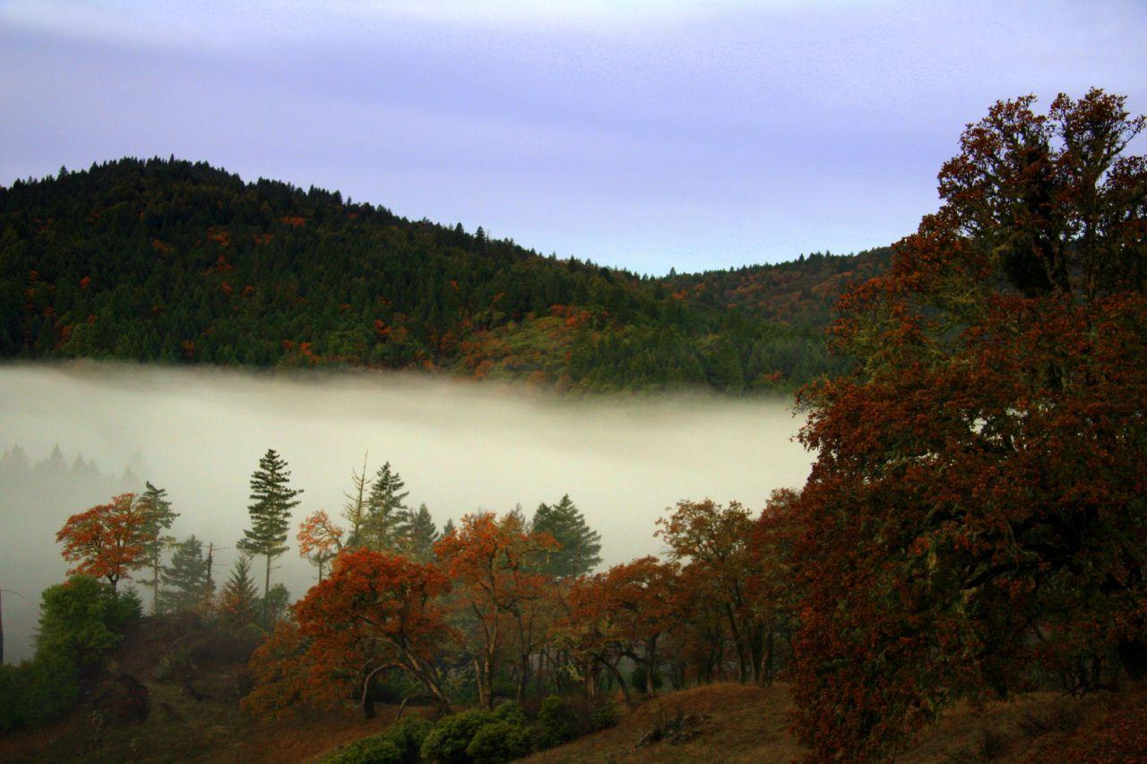Fall_Fog_in_Mendocino_county
